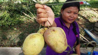 Photo of Wanyi, Buah Kalimantan yang Dipanen 4 Tahun Sekali